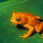 Amphibian Facts